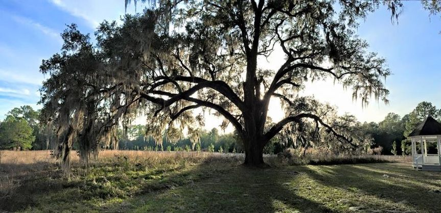 Our famous 200 year old Oak tree and ceremony site