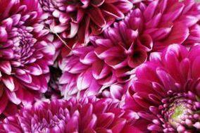 Origin Flowers : 503.775.9599