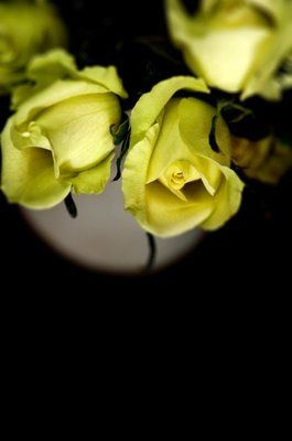 Tmx 1328347811565 Jenrose Portland wedding florist