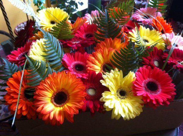 Tmx 1328349763904 2233962202597713339531907603309505649335292908104n Portland wedding florist