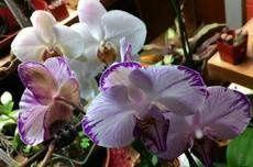 Tmx 1328372458085 Personal Portland wedding florist
