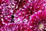 Origin Flowers : 503.775.9599 image