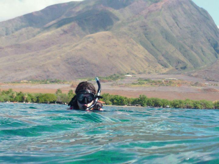 Tmx 1364835207339 Snorkeling With Sea Turtles In Maui Sarasota wedding travel
