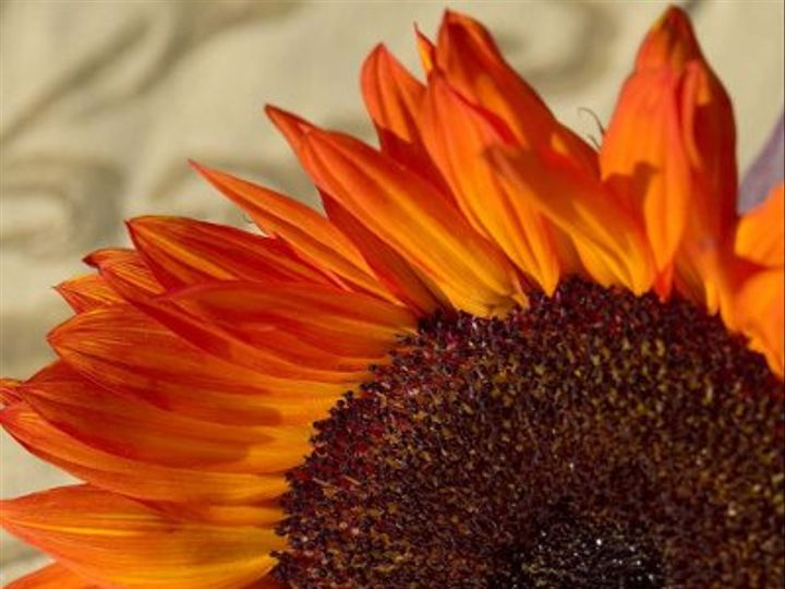 Tmx 1219120157357 Garden Sunflower 5 Small Cotati, CA wedding catering