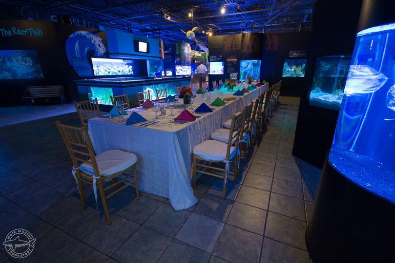 Aquarium dinner setup