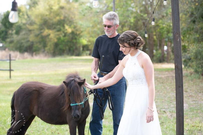 Willow our mini horse