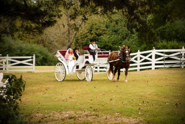Horse carriage for the newlyweds