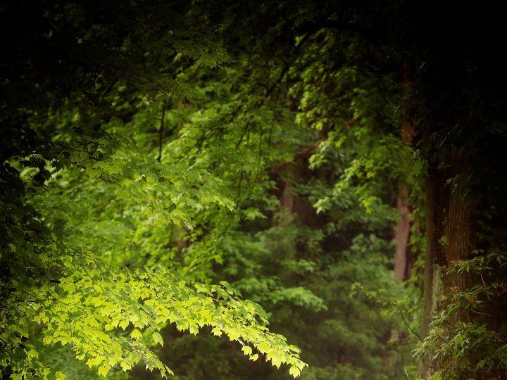 Tmx 1504903455815 Roth307 Floral Park, NY wedding photography