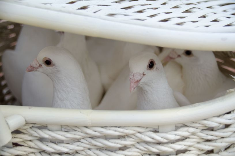 Ask about our dove release to add that special touch