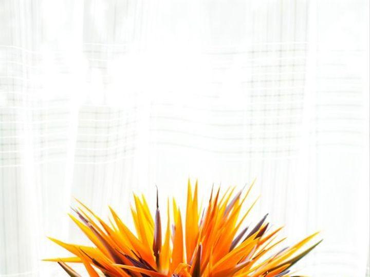 Tmx 1349882131009 Tropical2 Colts Neck wedding florist