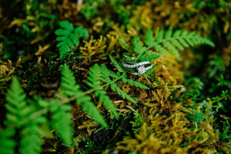 Among the ferns and moss - Jen Montgomery Photography