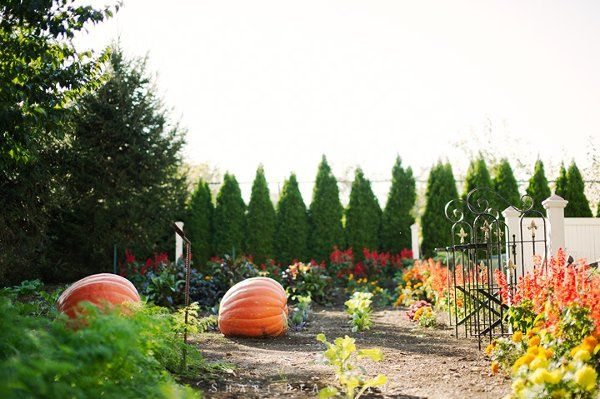 Tmx 1329320113482 PumpkinGarden Leola wedding venue