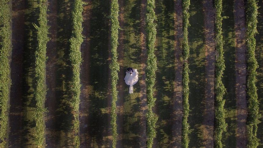Aerial first look in a vineyard.
