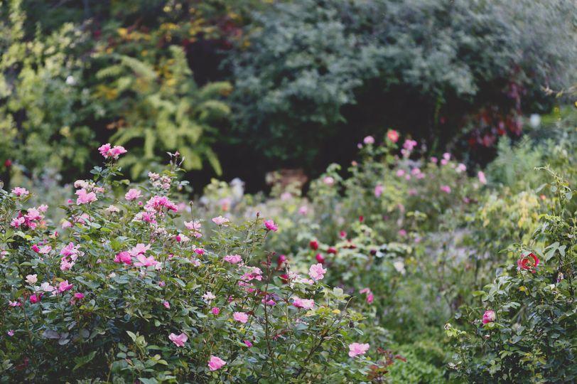 Rose Greely Garden