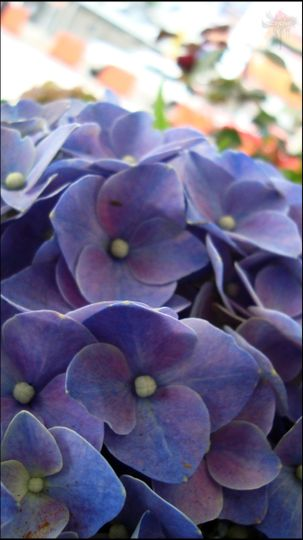 stockvault purple flowers127287