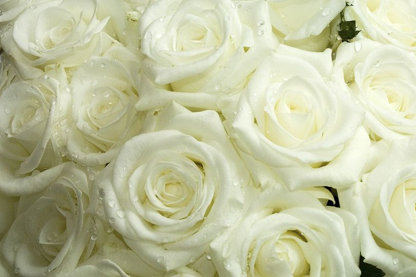 white wedding flowers 1313536
