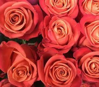 Coral reef roses