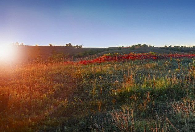 500 acres of untouched prairie make Prairiewood the most beautiful space.
