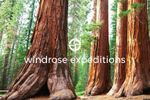 Windrose Expeditions image