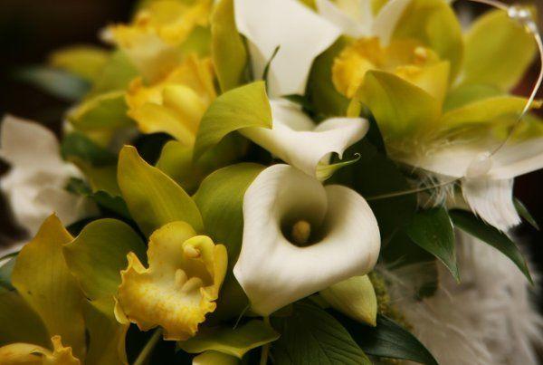 Tmx 1236209683313 IMG 2680 Grover Beach wedding florist