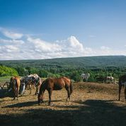 Tmx 1415292838492 Jen Michael Horses Grazing Kerhonkson, NY wedding venue