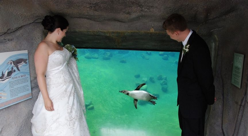 Couple looking at the penguin