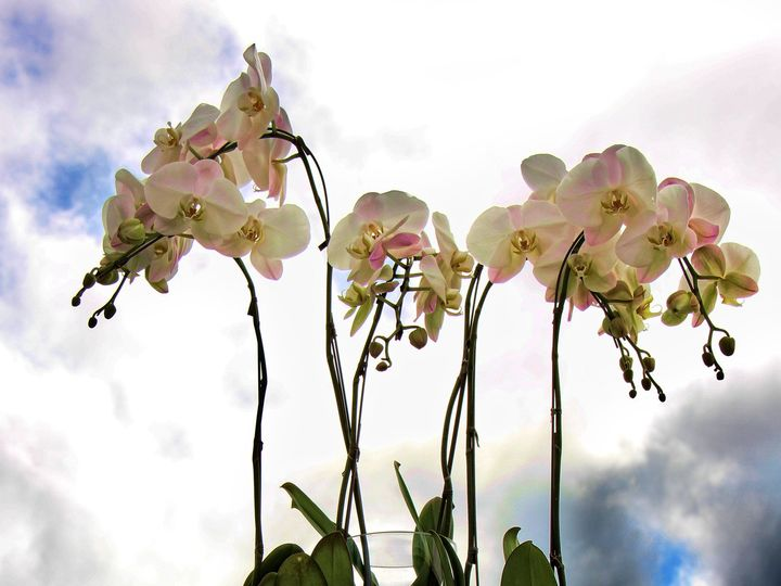 Tmx 1383592627063 Img063 Redmond wedding florist