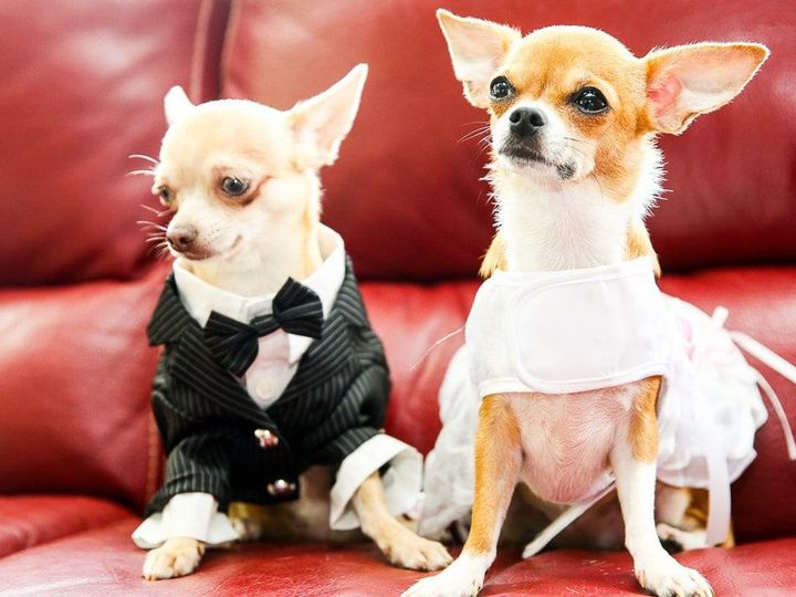Tmx 1537203176 Dbf91b9a89ee664d 1537203174 87033f8751e9288b 1537203173561 5 Wedding Photograph Rochester, MN wedding photography