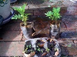 palmpot