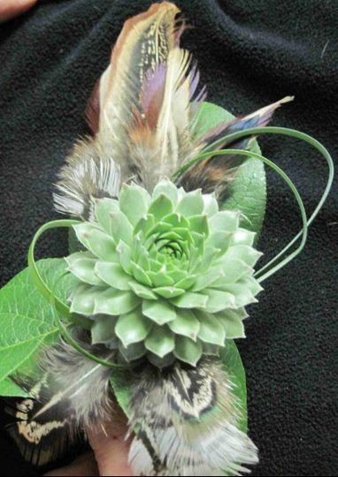 feathers succulent gra
