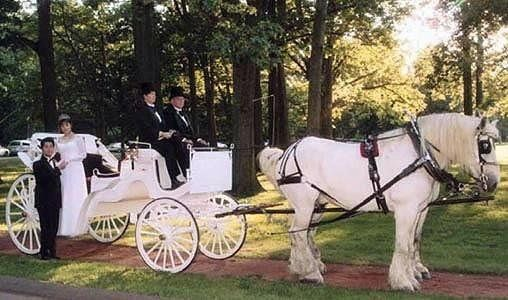 Horse drawn carriages available for your wedding!