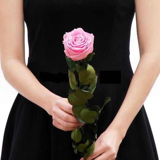 pink rose stem 51 49401 1559763592
