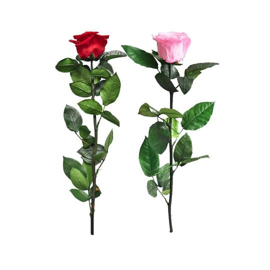 Stemmed Preserved Roses of Ecu
