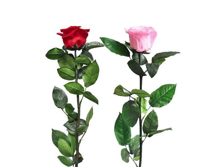 Tmx Rose Stem 51 49401 1559763559 Brooklyn wedding favor