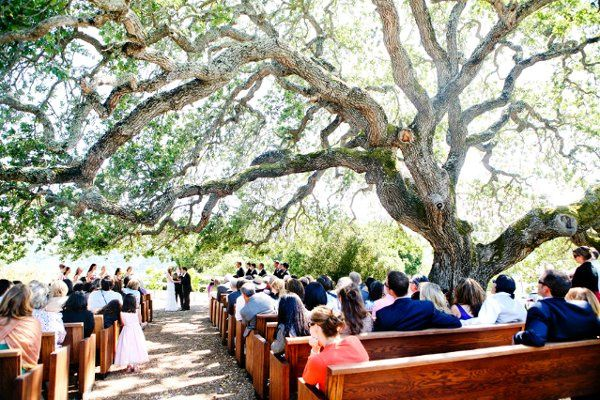 Ceremony under a Grand Old Oak Tree