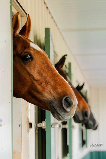 barn horses 51 2018501 161961056280360