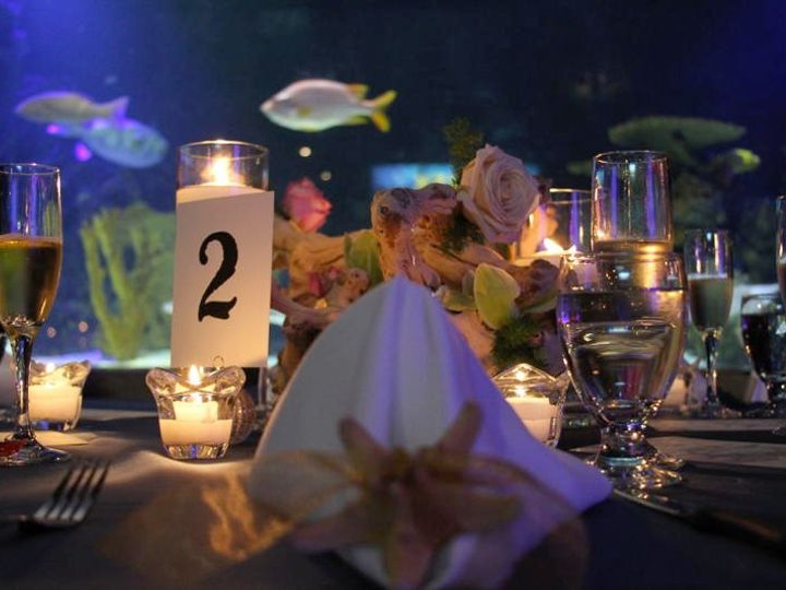 Tmx 1342033080814 Weddignaquarium065 Stonington, Connecticut wedding florist