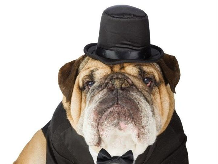 Tmx Dog Tuxedo 51 705901 Solon, OH wedding transportation