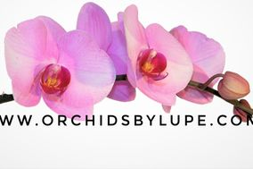 Orchids by Lupe