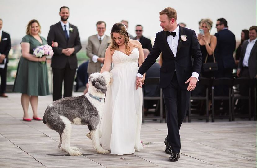 Bride's dog at the ceremony!