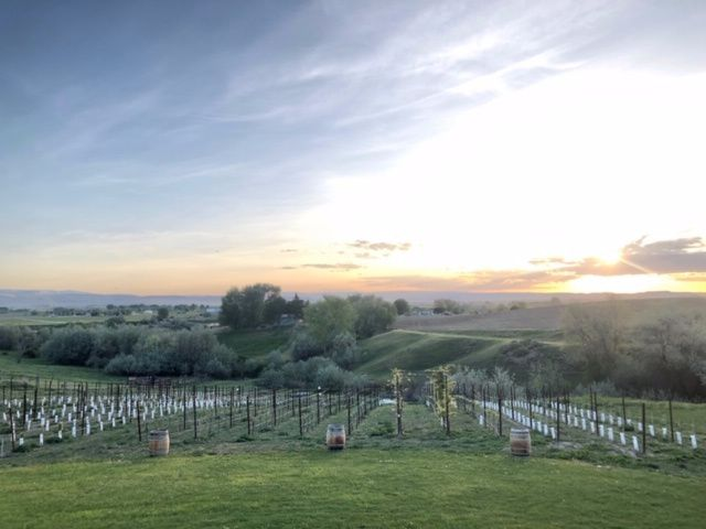 View overlooking the vineyard
