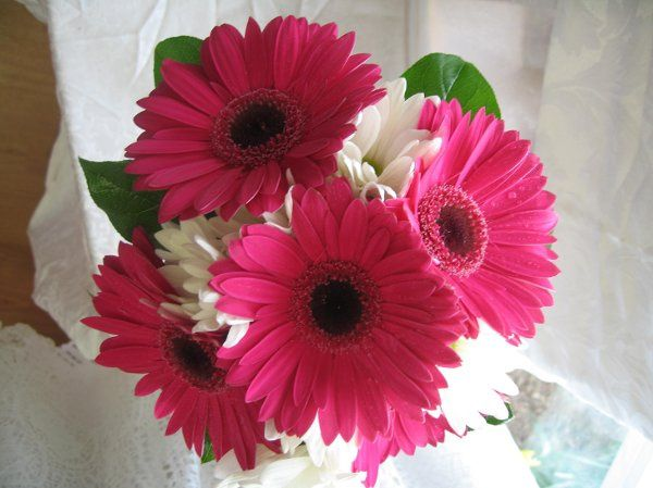 Sweet, simple pink gerberas and white daisys