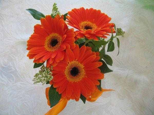 Orange gerbera daisys