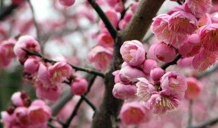 Plum Blossom Music