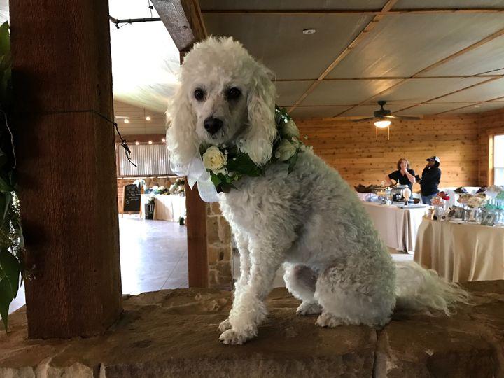 Tmx 1491414390067 Img7760 Wylie wedding florist
