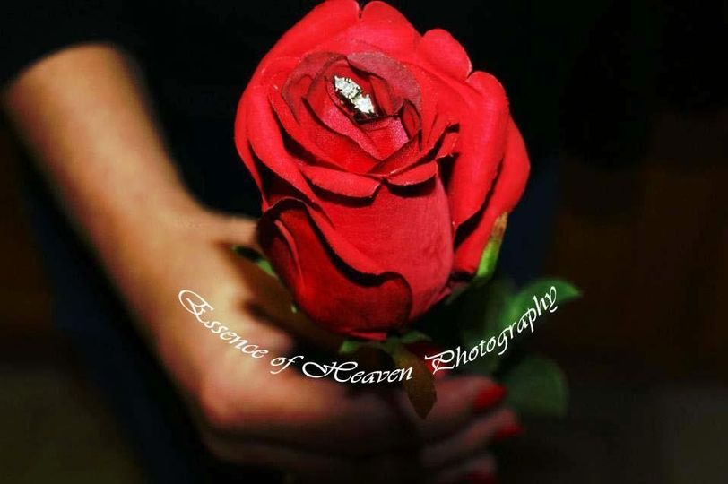 f585da647f198ebc 1344069170133 Rose