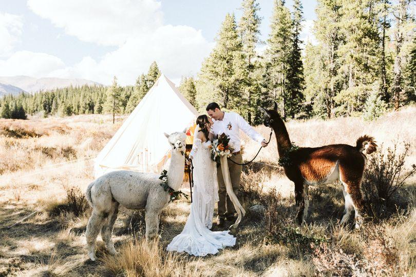 stephanie wood photography colorado cabin alpaca shoot 8619 51 1027511