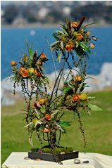 800x800 1288151024603 pacificorange159x239