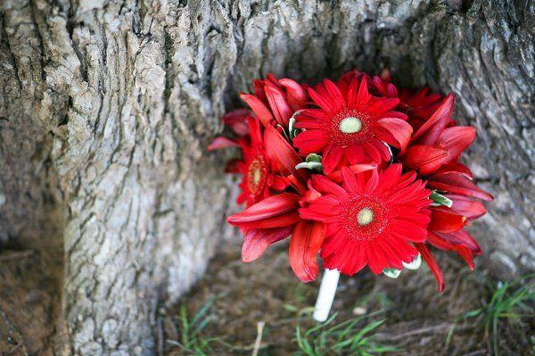 Tmx 1313438079015 AmandaGeierPhotography016 Arlington, TX wedding florist