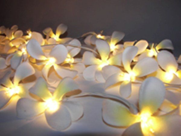 Fairy Lights with over 40 designs to choose from.